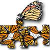monarchs thumb