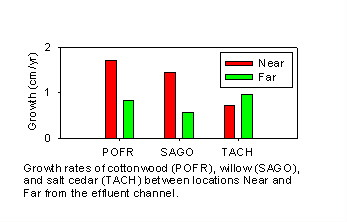 Tree growth rates 2