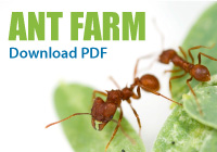 Ant Farm Activity, Download PDF