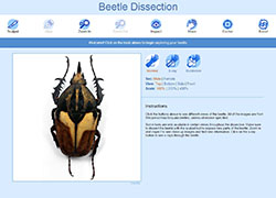 Beetle-dissection-screenshot