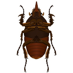 Underside beetle illustration