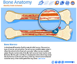 Virtual Bone Anatomy Lab