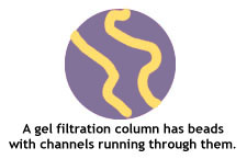 gel filtration  column