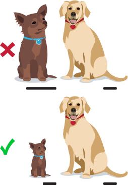 Scale comparison - chihuahua and lab retriever