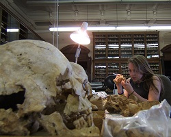 Kelly Harkens analyzing bones