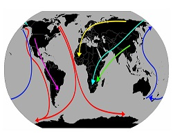 Bird migration routes tundra