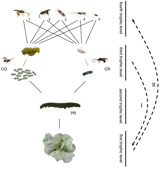Trophic levels of parasite system