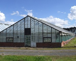 Greenhouse or glasshouse in Shropshire.