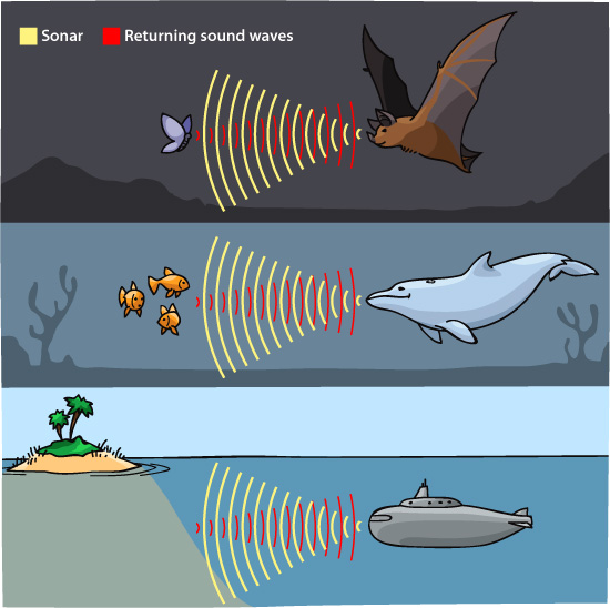 sonar echolocation illustration