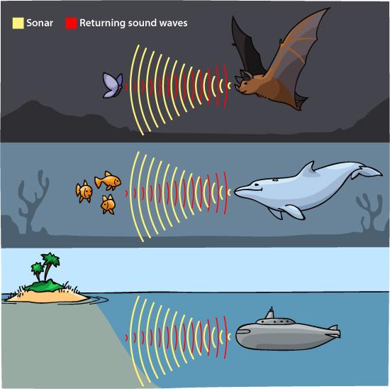 sonar echolocation illustration