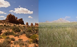 desert and grasslands