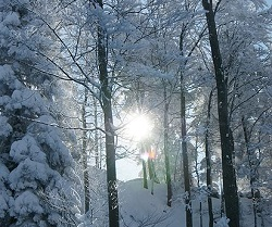 temperate forest in winter