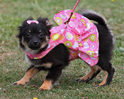 Puppy dressed up in pink