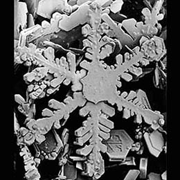 Snowflake in an SEM microscope
