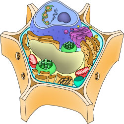 Parts of a cell ASU Ask A Biologist