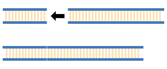Illustration of non-homologous end joining, showing cut bits of DNA just rejoining to the available ends.