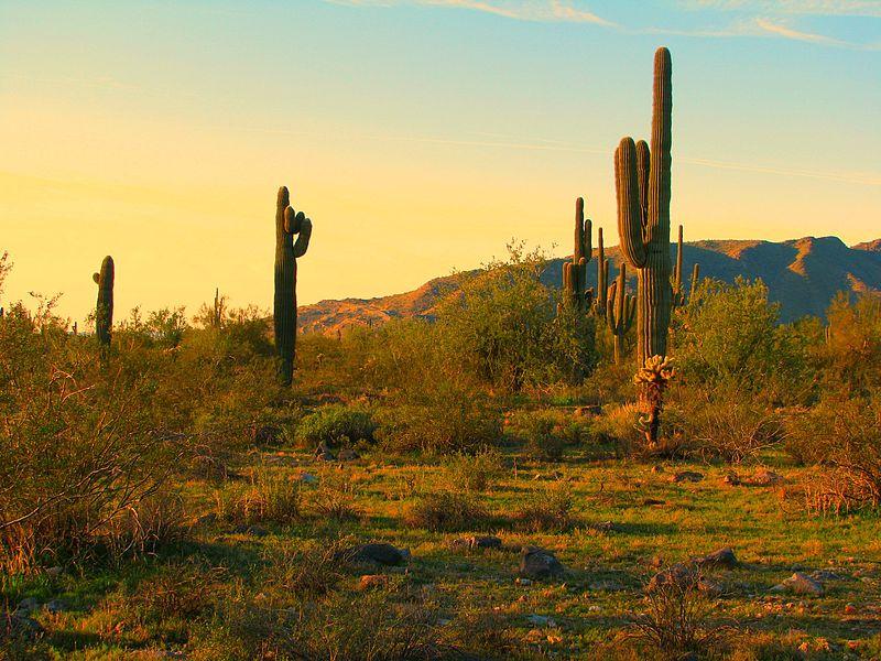Plantas del desierto | Ask A Biologist
