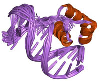 Coiled DNA