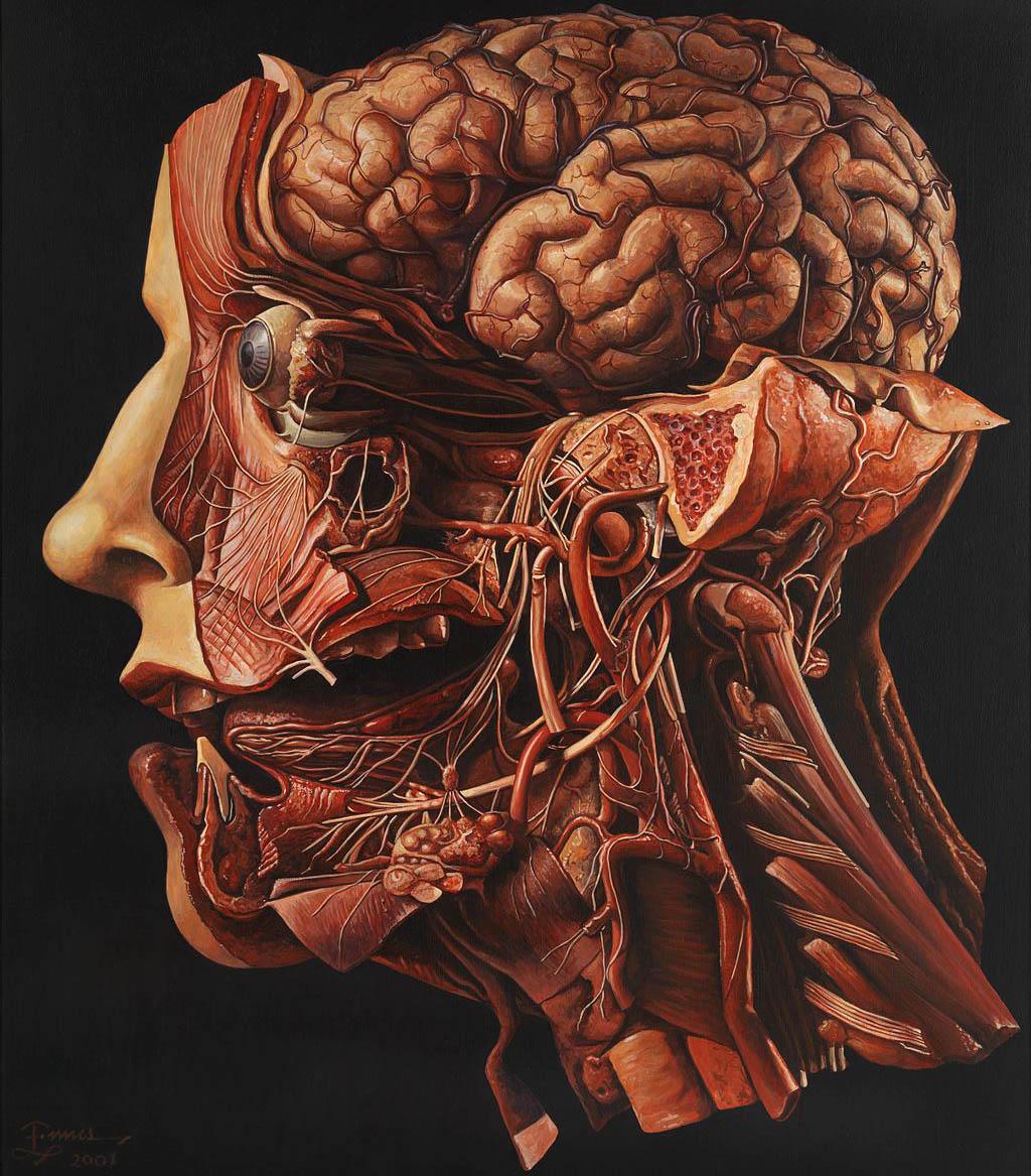 Dead body anatomy
