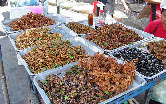Insect food stall in Thailand