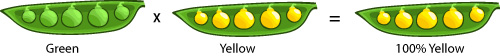 F1 peas: all yellow