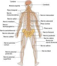 Medula espinal yahoo dating