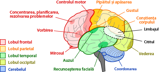 brain regions and functions