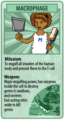 macrophage trading card