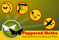 Peppered Moths Simulation | Ask A Biologist