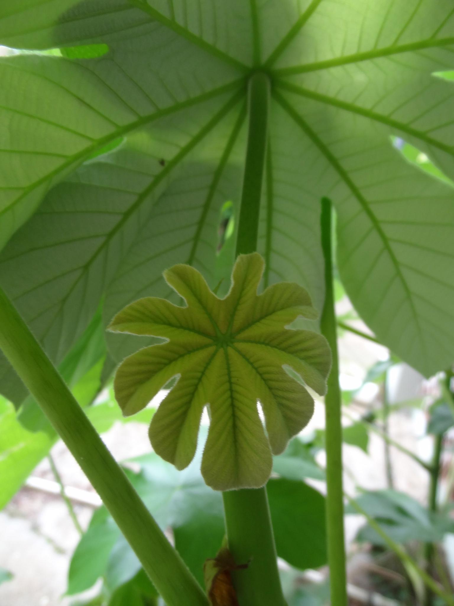 Plants Need Phosphate
