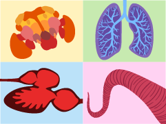 Physiology story illustration showing illustrated fly brain, human lungs, fish heart, and octopus muscles