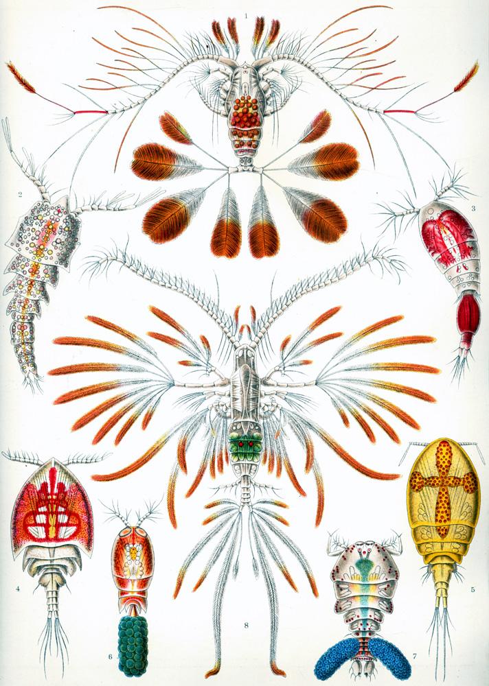 Plankton Ask A Biologist