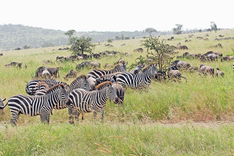 Savanna Wildlife | ASU - Ask A Biologist