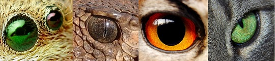 Animal eyes: jumping spider, rattlesnake, owl, cat