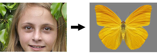 How humans see a butterfly