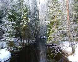 Plants of the Boreal Forest   ASU - Ask A Biologist