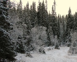 Taiga Or Boreal Forest Biome Ask A Biologist