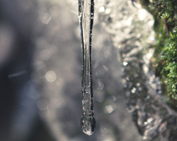 icicle in the shape of a water drop falling off moss