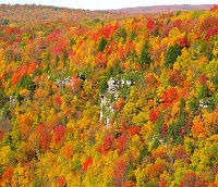 Changing colors of a deciduous forest