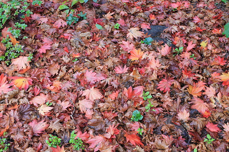 The Leaves Too Many People Love Minus Zero