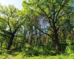 What Are The Natural Resources In The Temperate Deciduous Forest