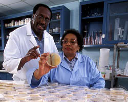 Microbiologists working for the USDA