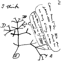 Darwin's I think drawing