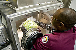 An African American man with short hair and glasses checks a lettuce head for any foreign substance. The lettuce is in a sealed clear box. The man uses black arm slots that allow him to reach in and inspect the lettuce without touching it wit his bare hands.