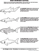 Ask A Biologist, Coloring Page, Shark Matching Activity