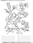 Ask A Biologist, Coloring Page, True Bugs