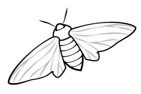 Peppered moth illustration