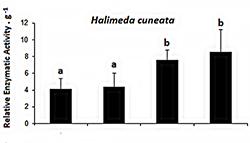 Algae enzyme activity