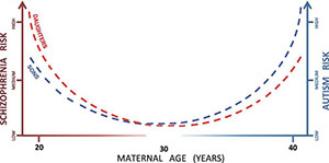 Graph showing maternal age risks for autism and schizophrenia