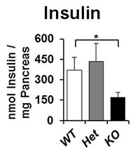 Insulin PLOS graph